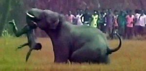 spanish-man-killed-by-elephant
